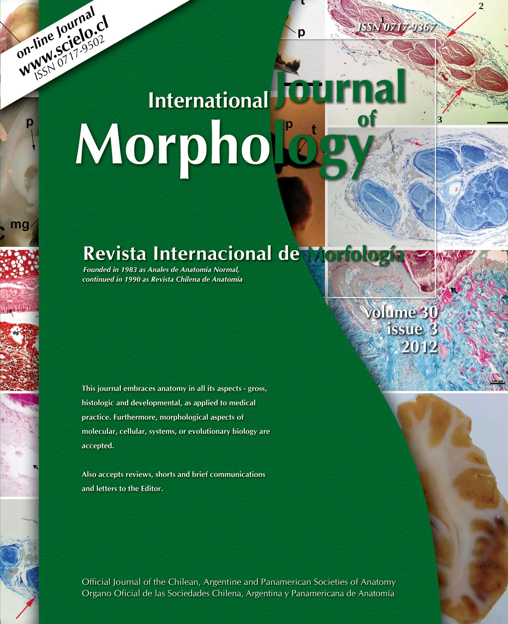 Fascículo 3 Archive - International Journal of Morphology