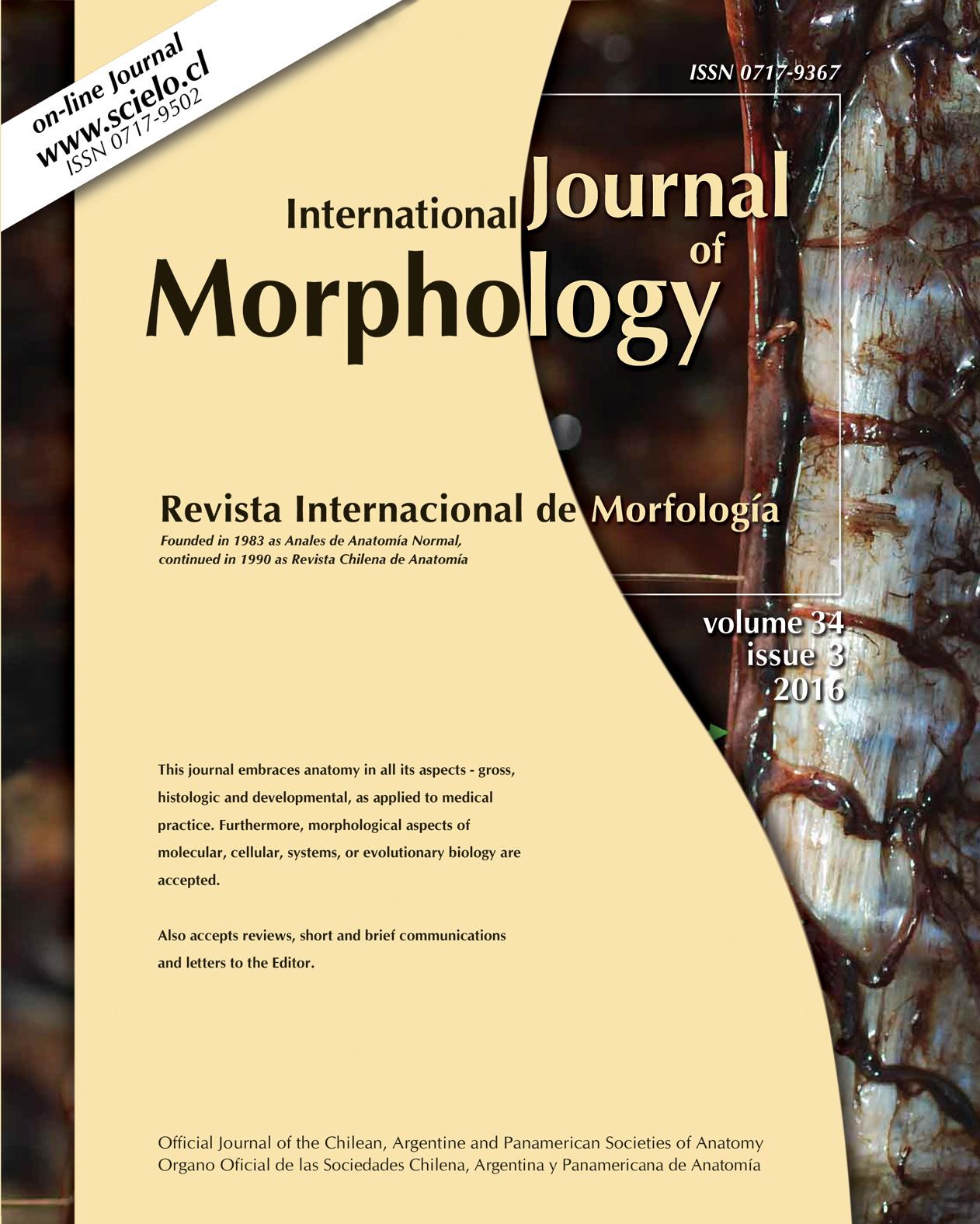 International Journal of Morphology - Otro sitio realizado con WordPress